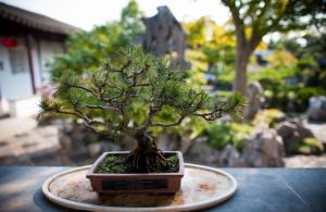 een kleine bonsaiboom met een tuin als onscherpe achtergrond